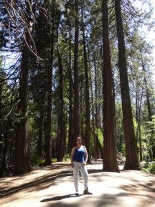 Bosque de secuoyas, Yosemite